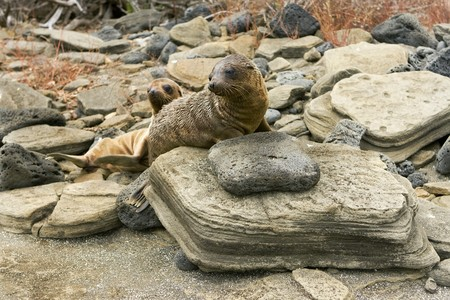 Sealion pups on the Galapagos Islands Stock Photo