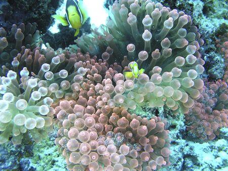 몰디브 산호초의 수중 장면