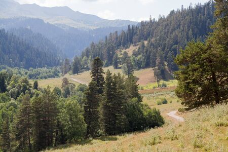 dirt road recreation: A fragment of the mountain forest. Caucasus, Arkhyz