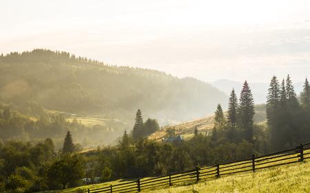 이른 아침에에서 풍부한 다채로운 여름 또는을 자연 농촌 지역 풍경