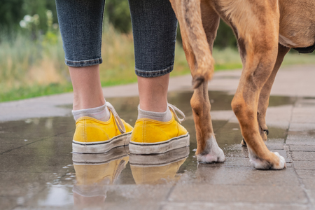 Walking the dog in the rain. Close up image of female legs in yellow shoes and puppy standing in puddle on rainy day