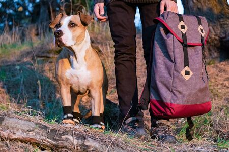 Hiker and dog in hiking shoes stand side by side in the forest. Dog in hiking boots and male person holding backpack pictured in evening sun Stok Fotoğraf