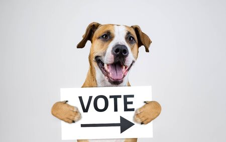 "American election activism concept with staffordshire terrier dog. Funny pitbull terrier holds ""vote"" sign in studio background"