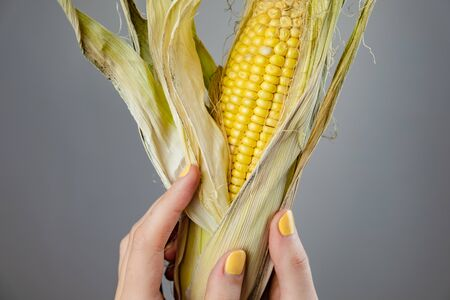 Female hands with a corn cnob. Abstract image of woman fingers with yellow fingernails holding ear of corn