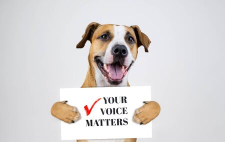 "American election activism concept with staffordshire terrier dog. Funny pitbull terrier holds ""your voice matters"" sign in studio background"