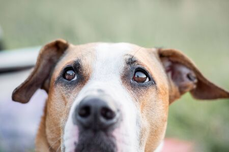 Close-up portrait of a dog looking up, focused on the eyes. Macro view of dog's eyes outdoors in natural conditions, shallow depth of field Banco de Imagens