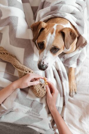 Spending time in bed and doing knitting, lazy cozy sleep-in concept. Female person lays in bed with a cute dog and enjoys her hobby, person's point of view