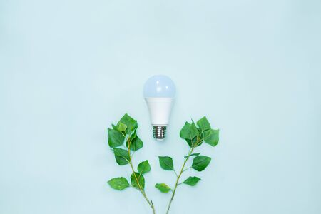 Energy efficience, ecological technologies, green electricity concept. Led lightbulb between brances with tender green leaves symbolizing environmental awareness and saving electricity to preserve nature Standard-Bild