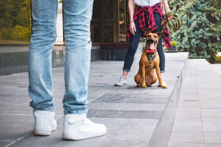 Young people doing obedience training to their mixed breed dog in urban environment. Responsible upbringing, teaching the pet concept: man and woman exercise their adopted puppy Stock Photo