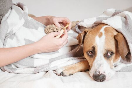 Spending time in bed and doing knitting, lazy cozy sleep-in concept. Female person lays in bed with a puppy and enjoys her hobby