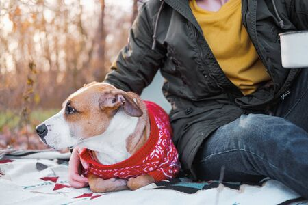 Sharing a company with loyal dog in late autumn. Person spends leisure time alone with his pet outdoors