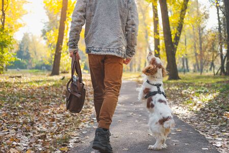 Cute excited dog going without a leash in the urban park. Spaniel walks together with owner, friendship with pets concept.