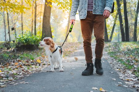 Man walking his dog in an autumn urban park. Russian spaniel as a companion dog going on the leash with owner Banque d'images