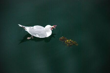 새가 밴쿠버에서 불가사리를 먹는다.