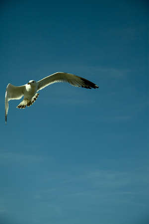 immigrate: Bird flying on the sky