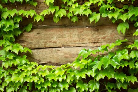Old wooden background with green floral frame Stock Photo - 11060044