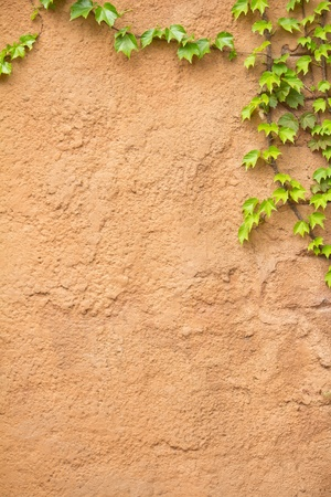 yellow concrete wall with plant  photo