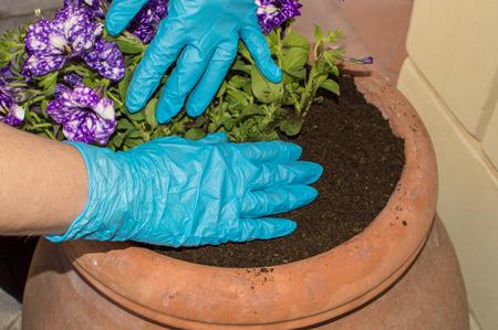gardening work Standard-Bild