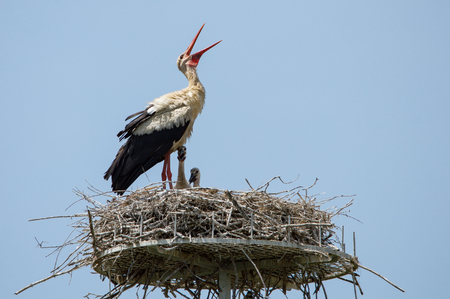 storks in the nest with puppies