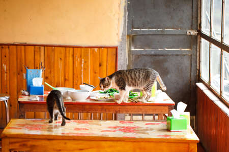 Impudent cats walk around the wooden kitchen table in search of food. Asian cuisine. Vietnam
