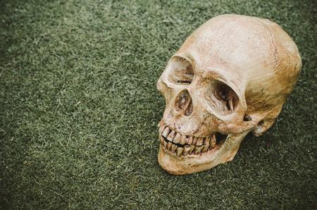 cranium: Human skull (cranium) on grass