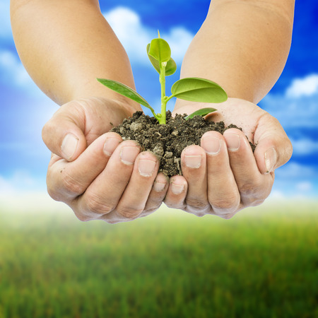 hands holding tree on abstract nature background Stockfoto