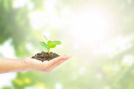 tree in hand on blurred abstract nature background