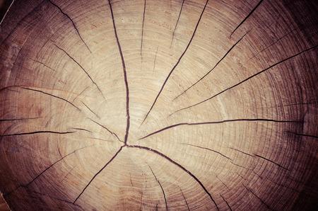 Textura de tocón de árbol Foto de archivo
