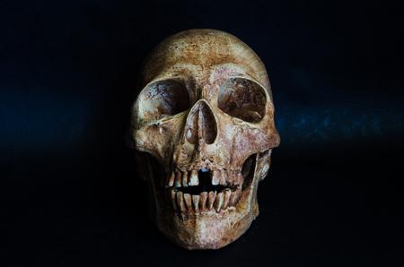 Still life the human skull on black background Stock Photo