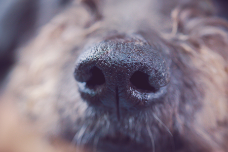 Close-up shot for nose dog