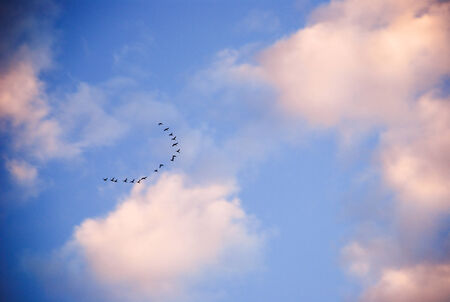 birds in the sky photo