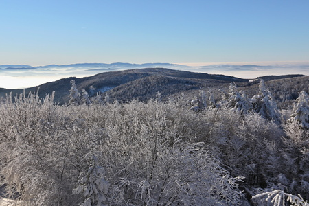 View of a winter forest in Czech Republic