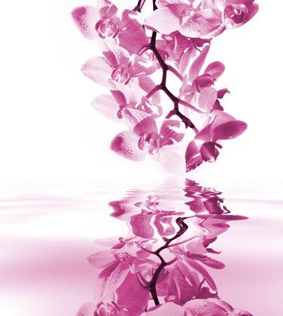 Orchid im Wasser an einem sonnigen Tag