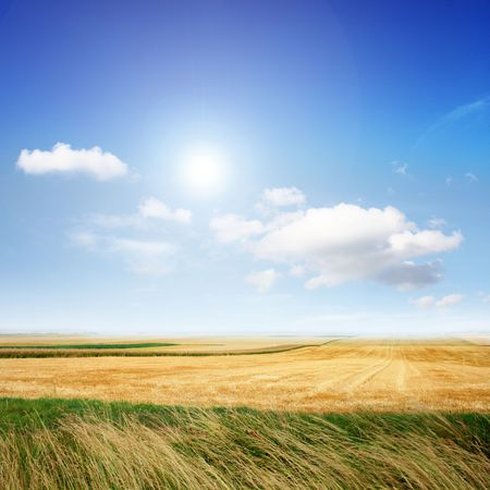 Beautiful scenery in the summer on sunny weather Stock Photo - 8100886