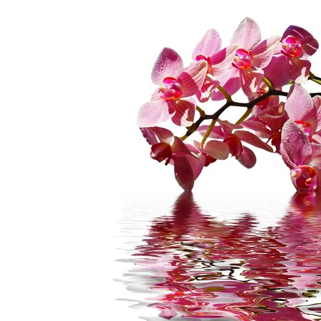 Orchid in the water on a sunny day Stock Photo