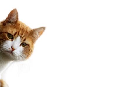 Gatito lúdica en espera para la posición de presa