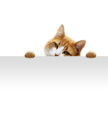 brute: Gattino giocoso in attesa per la posizione di prede