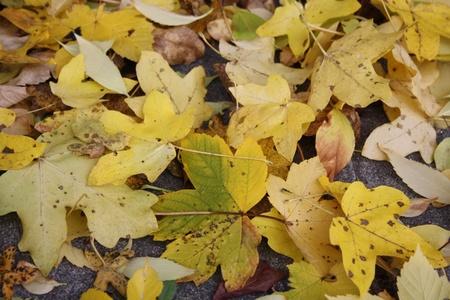 Beautiful colorful fall foliage in autumn Stock Photo - 10929956