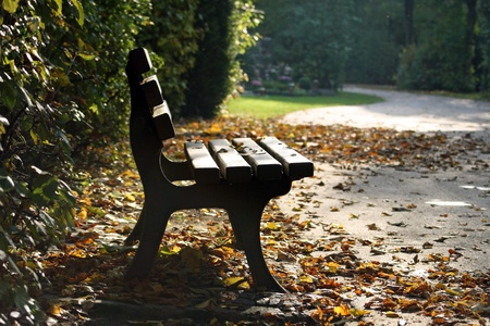 Bench in the park on a sunny day  photo