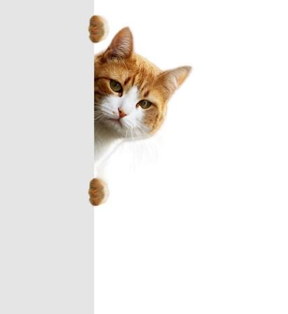 brute: Gattino giocoso in attesa per la posizione preda Archivio Fotografico