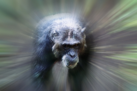 An African monkey in captivity at the zoo Stock Photo - 14273104