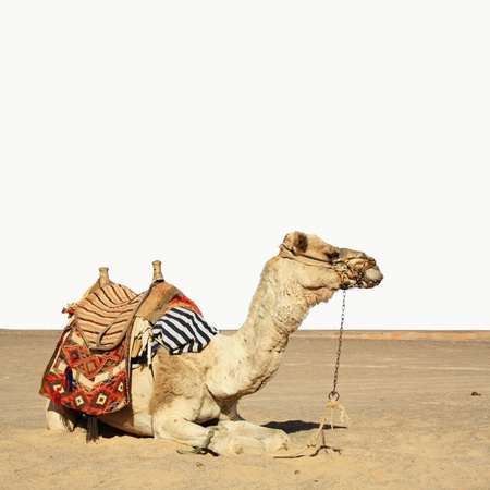 in the summer holiday on a camel ride photo