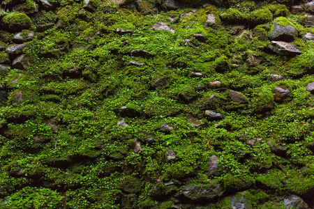 Wet green moss on old stone wall background. Stockfoto