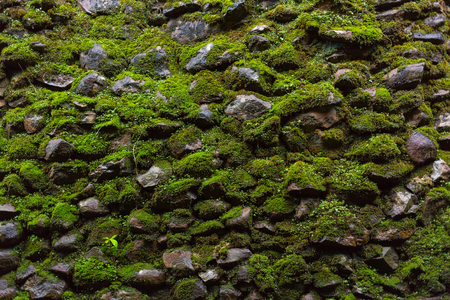 Wet green moss on old stone wall background. Imagens