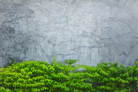 creeper: cement or concrete pavement with green leaf for background
