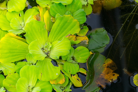 spawn: Spawn - green plant in water pond with space for text.