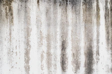 grungy: Old grungy white wall.