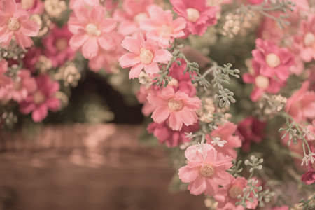 flower for background,Love concept.