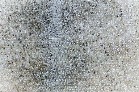 Fungus on Towel Cloth.