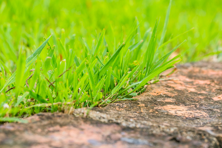 close up grass grown against old brick footpath. Stock Photo